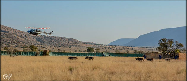 Conservation at Mountain Zebra National Park