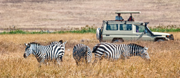 Cacadu District a Blend of Big 5 Wildlife and an Art Festival - Eastern Cape - South Africa