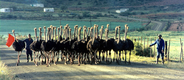 Klein Karoo In The Western Cape, South Africa